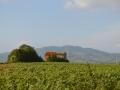 Casa Silvestri, in lontananza